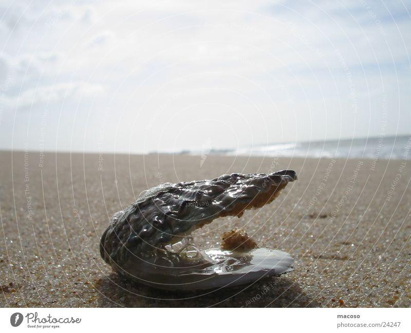 Muschel-Fernweh Wasser Meer Strand Ferien & Urlaub & Reisen Sand
