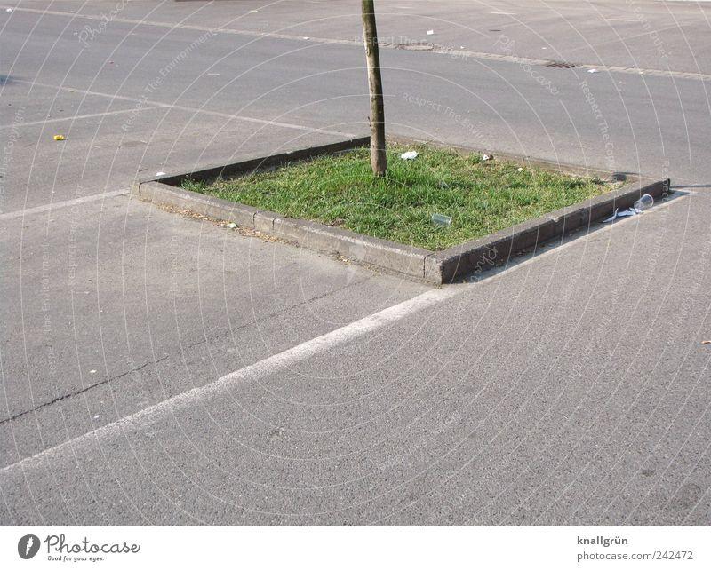 Lebensraum Natur grün Baum Pflanze Einsamkeit Ferne Umwelt grau Gras klein Erde Ordnung Platz stehen Urelemente Asphalt