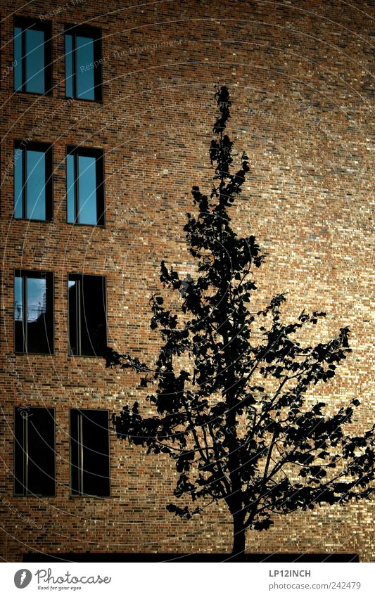 Hafencity tree Baum Haus Umwelt Fenster Wand Architektur Holz Mauer Gebäude Deutschland gold Fassade Design Europa Häusliches Leben Backstein