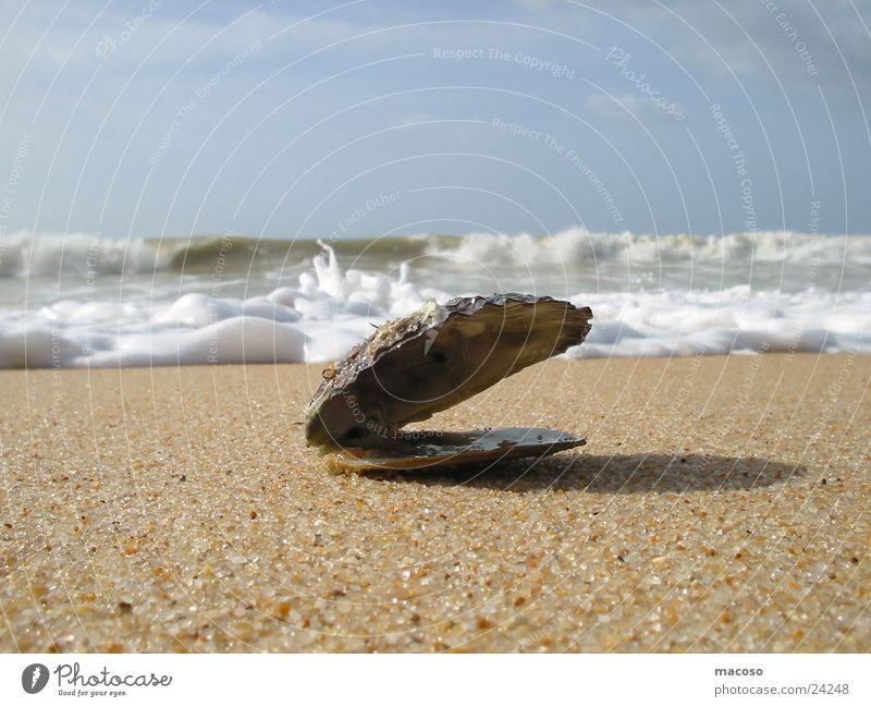 Muschel vor Untergang Meer Strand Wellen Brandung Wasser
