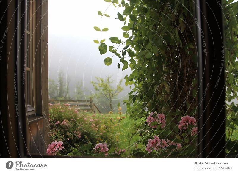 Zimmer mit Aussicht Natur Pflanze Sommer Ferien & Urlaub & Reisen Blume ruhig Einsamkeit Ferne Wiese Fenster Garten Blüte Zufriedenheit Feld Nebel Sträucher