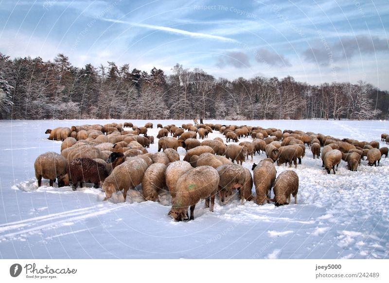 Natur blau Tier kalt Schnee Park Zusammensein Feld natürlich außergewöhnlich authentisch niedlich Schönes Wetter Gelassenheit Gewalt frieren
