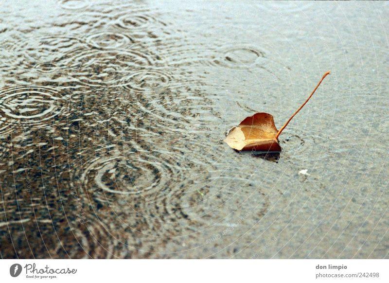 baumblatt Landwirtschaft Forstwirtschaft Wasser Herbst schlechtes Wetter Regen Pflanze Blatt Teich Schwimmen & Baden dehydrieren analog Cross Processing nass
