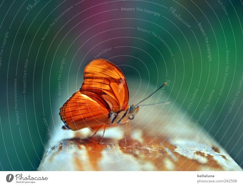 Ein Falter für Mella Natur Garten Park Tier Wildtier Schmetterling Flügel 1 sitzen ästhetisch außergewöhnlich einfach elegant exotisch fantastisch frei hell