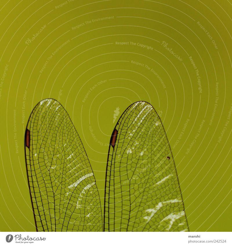 zerbrechlich grün Tier 2 Flügel durchsichtig Libelle Libellenflügel