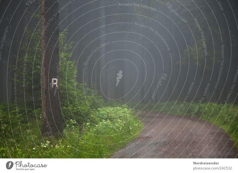 R Tourismus Ausflug Berge u. Gebirge wandern Natur Landschaft Pflanze Klima Wetter schlechtes Wetter Nebel Regen Baum Wald Straße Wege & Pfade Zeichen