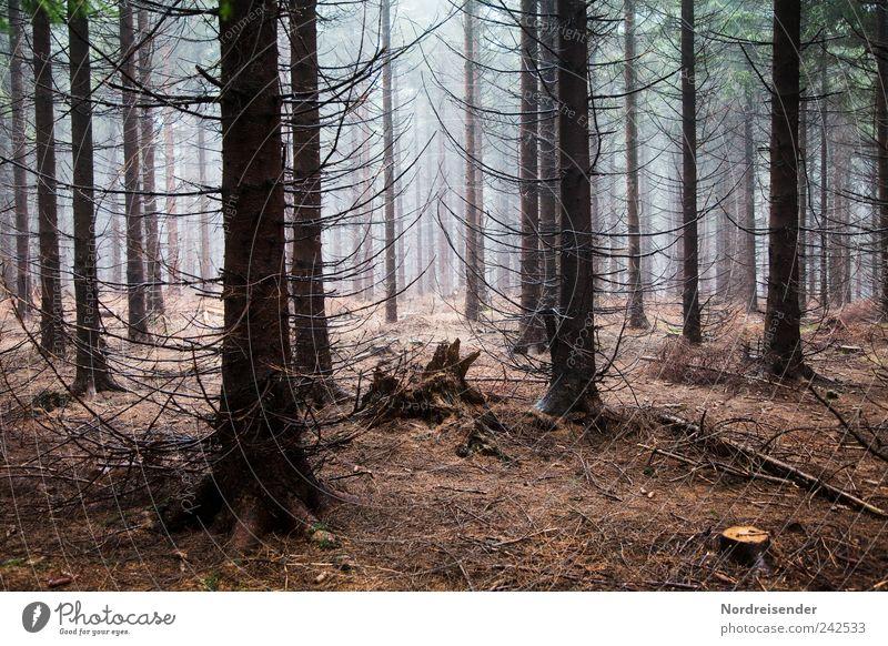 Wald Natur Baum Pflanze Holz träumen Regen Angst Ausflug Nebel wandern ästhetisch Wachstum Landwirtschaft Duft Arbeitsplatz