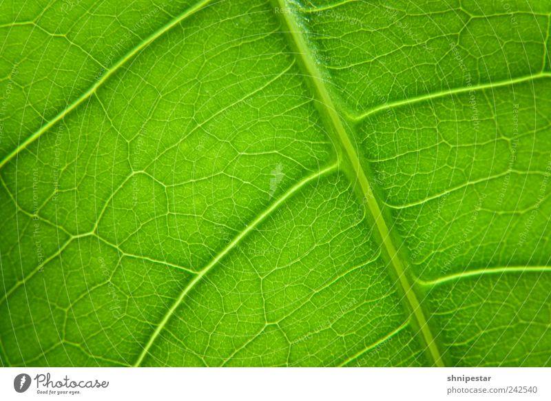 Chlorophyll-Spender elegant Dekoration & Verzierung Umwelt Natur Tier Urelemente Klima Klimawandel Wetter Pflanze Blatt Grünpflanze Topfpflanze Erholung