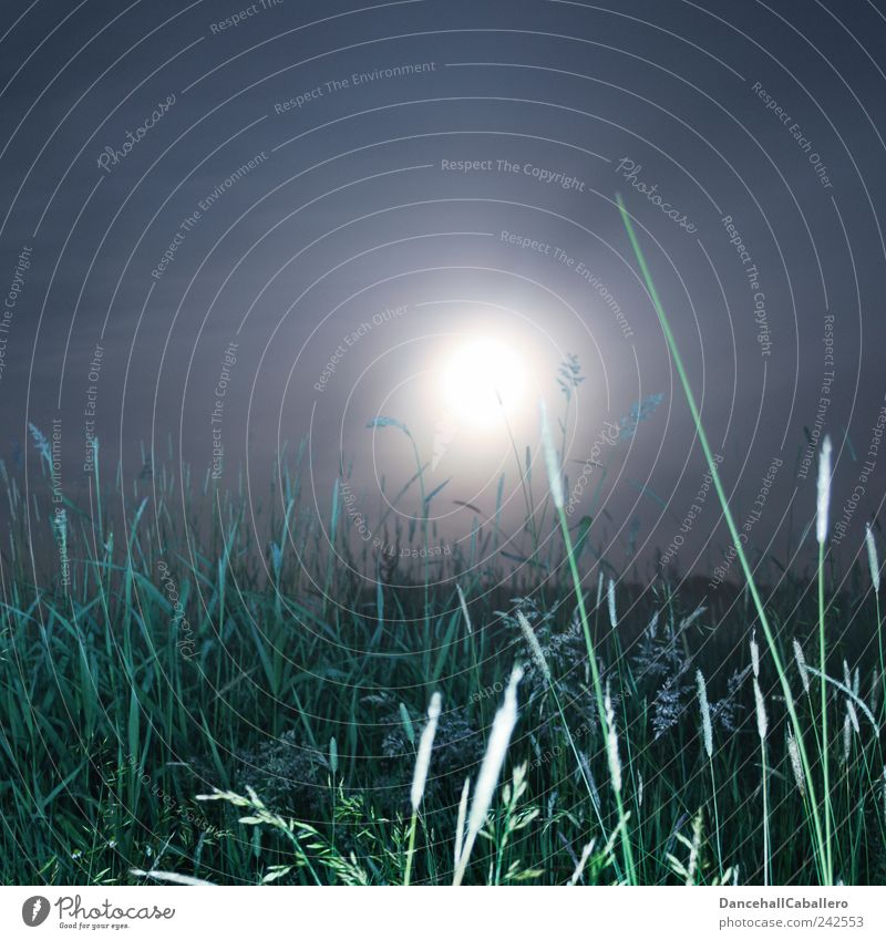 Sommernachtstraum II Natur Himmel grün blau Pflanze dunkel kalt Wiese Gras Frühling träumen Landschaft Luft Stimmung hell
