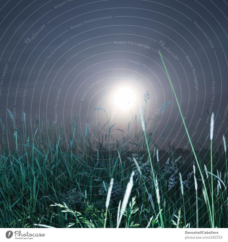 Sommernachtstraum II Umwelt Natur Landschaft Pflanze Luft Himmel Nachthimmel Mond Vollmond Frühling Klima Wetter Nebel Gras Grünpflanze Wiese Feld
