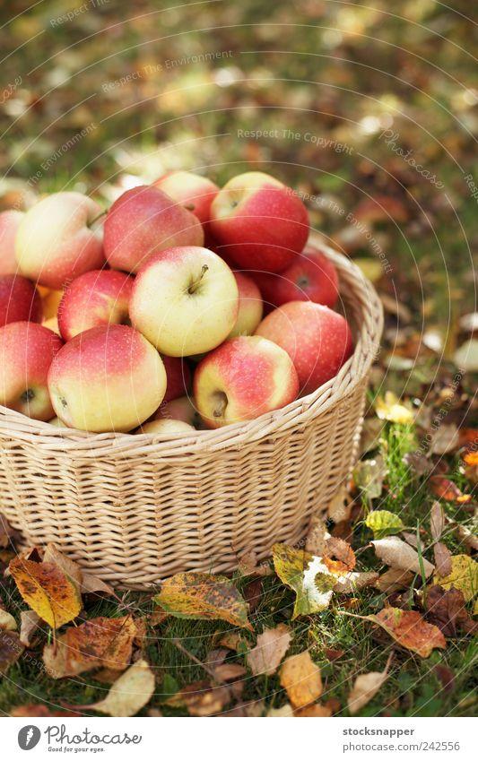 Äpfel Jahreszeiten Herbst Menschenleer rot Gartenarbeit Rasen reif Frucht Ernte Korb Weidenkorb Apfel