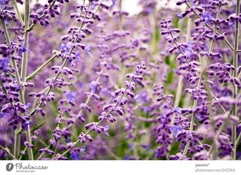 Lila Natur Pflanze Freude Tier Umwelt Landschaft Blüte Schönes Wetter