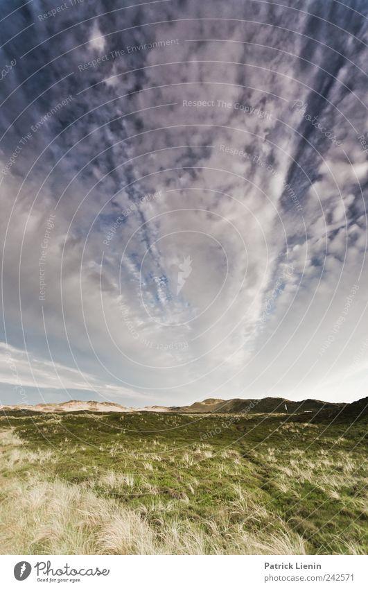 Wolkenrausch Himmel Natur blau schön Pflanze Sommer Ferien & Urlaub & Reisen Wolken Ferne Freiheit Landschaft Umwelt Stimmung Luft Wetter Zufriedenheit
