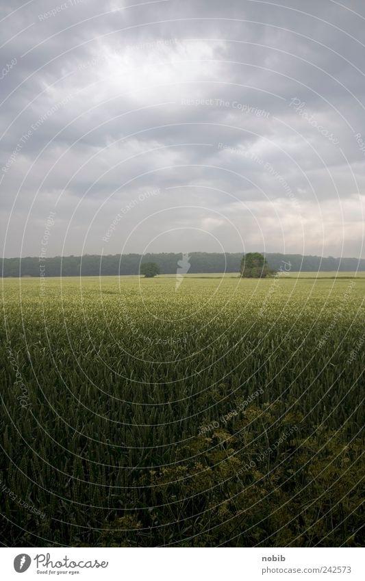 auf Rügen Natur grün Sommer Ferien & Urlaub & Reisen Wolken Einsamkeit Ferne dunkel grau Landschaft Stimmung Feld Wetter frei Horizont Blühend