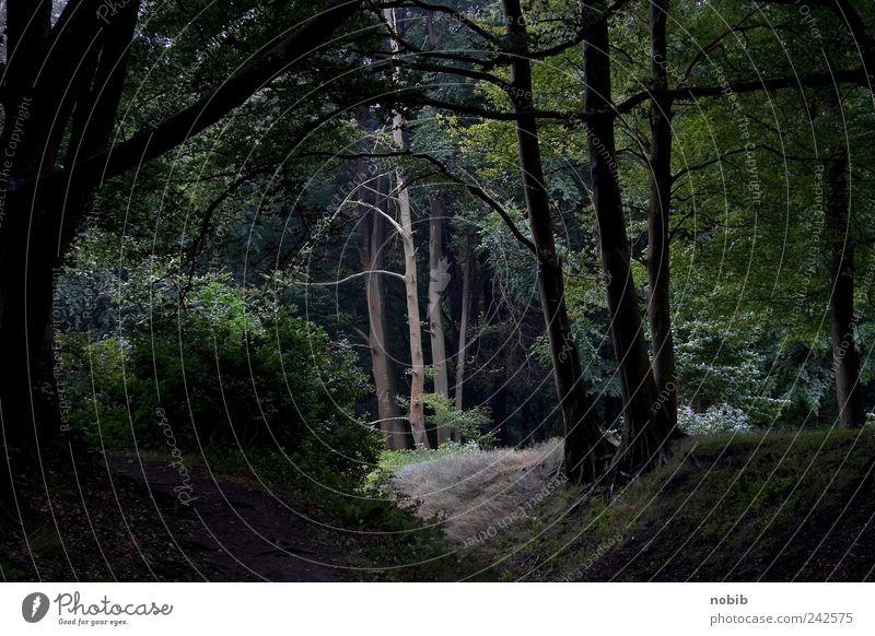 im Wald da… Natur grün Baum schwarz dunkel Landschaft grau Traurigkeit gruselig Urwald Vorfreude Endzeitstimmung Stimmung
