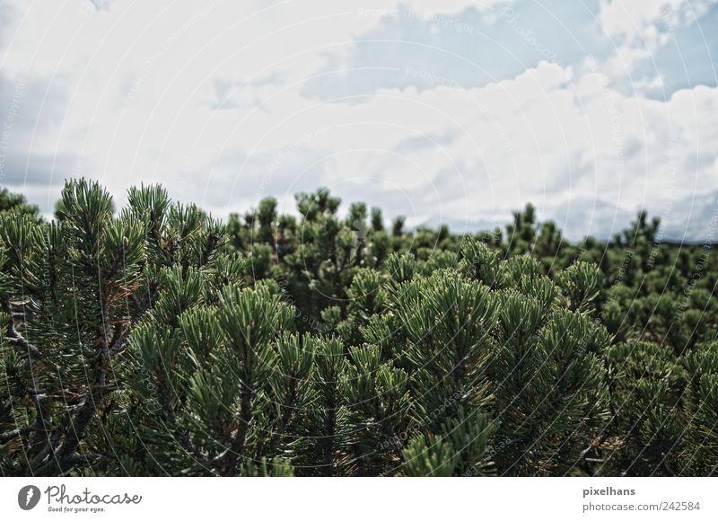 Hoch oben Natur Pflanze Himmel Wolken Sommer Schönes Wetter Baum Sträucher Wildpflanze Wald Berge u. Gebirge Menschenleer Holz beobachten entdecken wandern alt