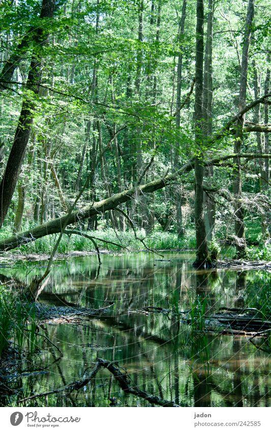 Zu Besuch im Märchenwald Natur Wasser Baum Einsamkeit Wald Leben dunkel wandern Tourismus Idylle gruselig Landwirtschaft Urwald exotisch Bach Schüchternheit