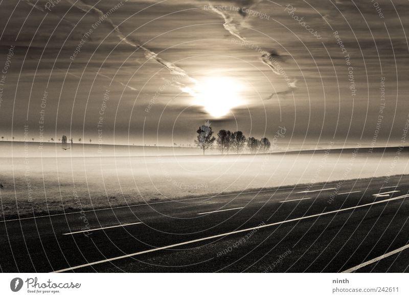 new morning Jagd Sonne Winter Landschaft Pflanze Tier Wolken Nebel Baum Feld Verkehr außergewöhnlich dunkel schwarz weiß Gefühle Glück Euphorie Optimismus
