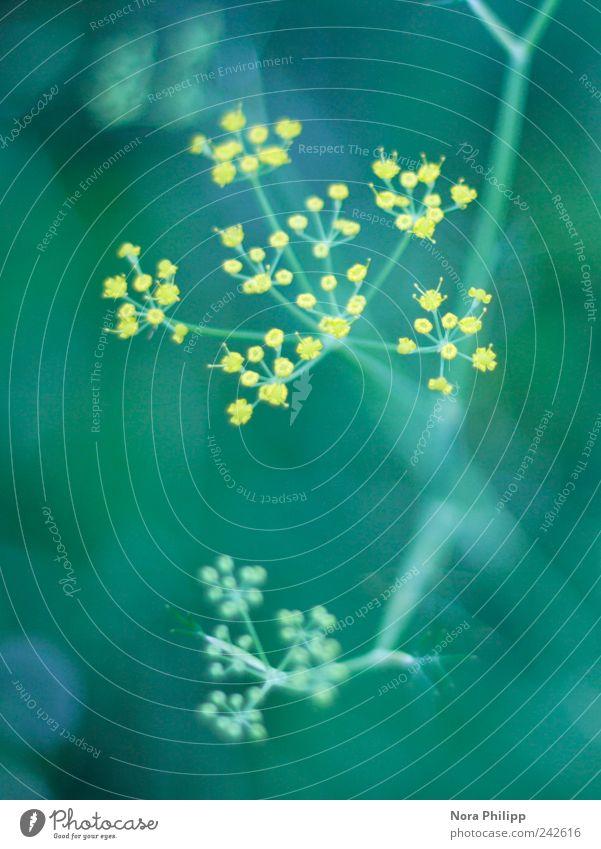 stars in eden Natur blau Pflanze Sommer Blume ruhig gelb Erholung Umwelt Wiese Garten Blüte träumen Park Wachstum Idylle