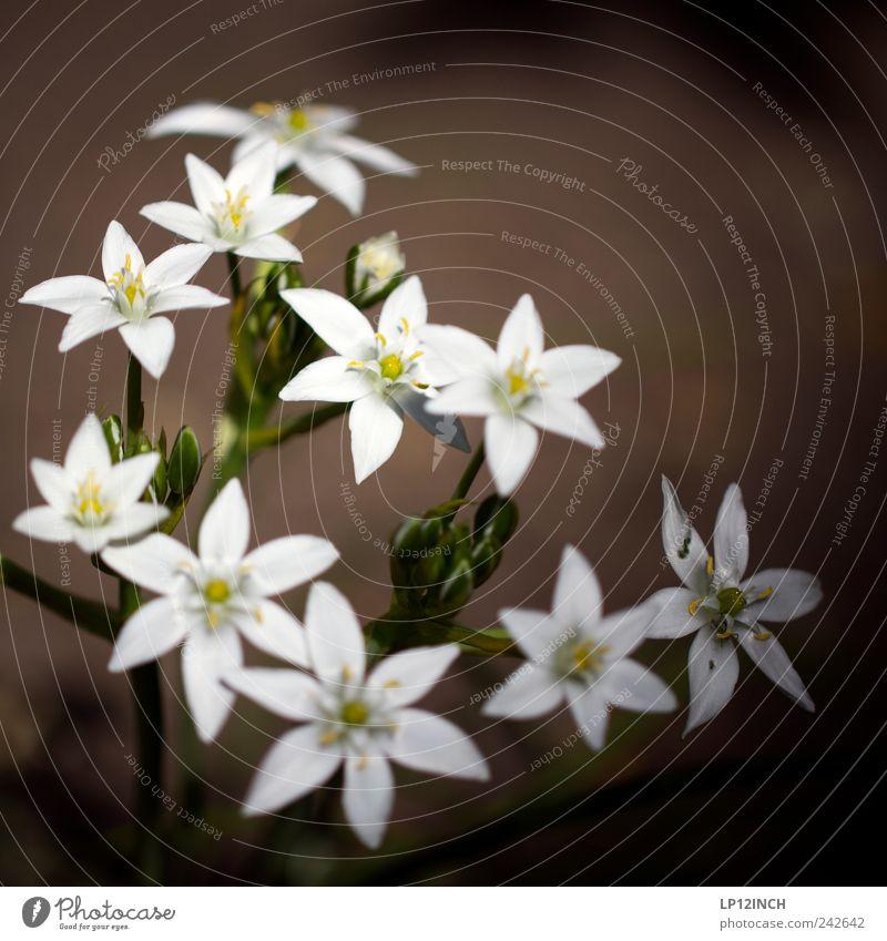 Flowers for aines Natur weiß schön Pflanze Sommer Blume gelb Umwelt Wiese klein Garten Glück Park wild Romantik Vergänglichkeit