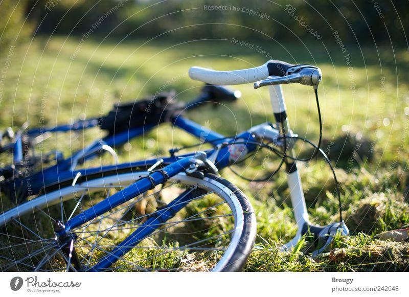 Blaues Fahrrad auf grüner Herbstwiese Natur grün Pflanze Sommer Farbe Erholung Umwelt Freiheit Gras Garten träumen Zufriedenheit Fahrrad Freizeit & Hobby Ausflug Sträucher
