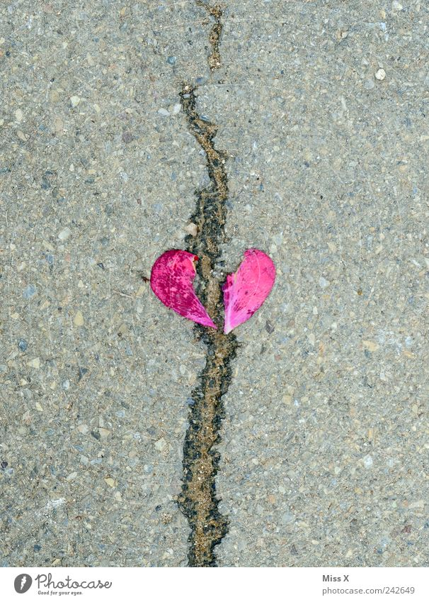 gebrochenes Herz rot Gefühle Stein Traurigkeit rosa Herz Riss Verliebtheit gebrochen Trennung Sorge Liebeskummer Blütenblatt Blüte Scheidung herzförmig