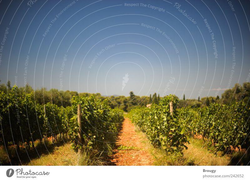 Weinplantage eines Klosters am Mittelmeer Himmel blau grün schön Pflanze rot Sommer Ferien & Urlaub & Reisen Glück Zufriedenheit Feld Erde Ausflug Tourismus