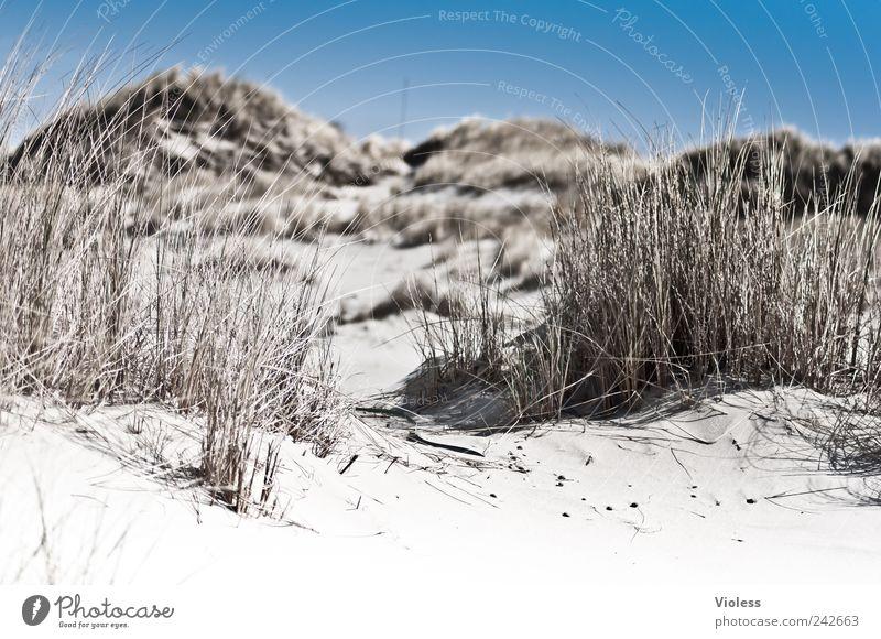 Spiekeroog | ...Dunegrass whispers Natur Sommer Strand Erholung Landschaft Sand Düne genießen Halm Gras Dünengras