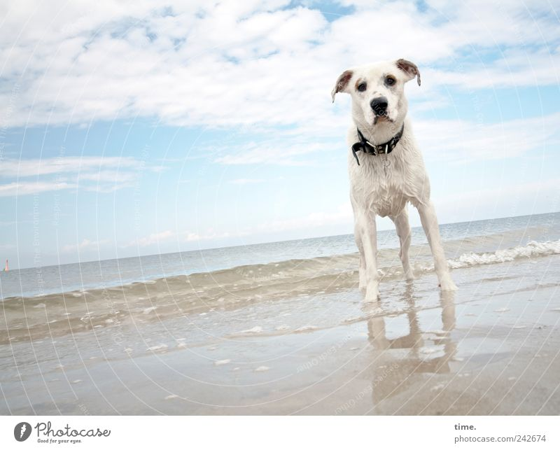 Waiting For Great Things To Come Strand Tier Wasser Himmel Wolken Horizont Schönes Wetter Nordsee Meer Fell Hund Sand beobachten Blick warten nass achtsam