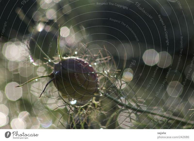glitzernde erfrischung Umwelt Natur Pflanze Urelemente Wasser Wassertropfen Sommer Blume ästhetisch glänzend Lichtpunkt Reflexion & Spiegelung Farbfoto