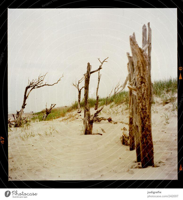 Weststrand Umwelt Natur Landschaft Pflanze Baum Gras Küste Strand Ostsee Meer Sand Holz dehydrieren außergewöhnlich natürlich wild Stimmung Vergänglichkeit