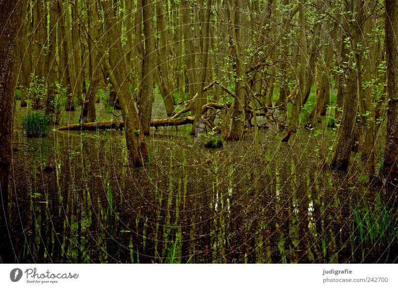 Darßwald Natur Wasser Baum Pflanze ruhig Wald dunkel Landschaft Stimmung Umwelt Wachstum natürlich außergewöhnlich Urwald Moor