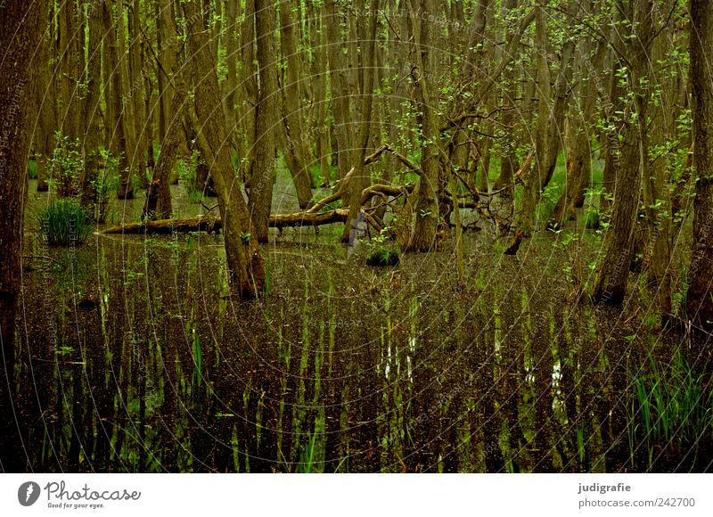 Darßwald Umwelt Natur Landschaft Pflanze Wasser Baum Wildpflanze Wald Urwald Wachstum außergewöhnlich dunkel natürlich Stimmung ruhig Moor Farbfoto