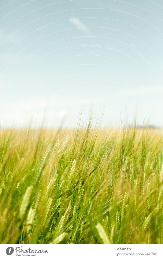 Grünes Feld mit Blauem Himmel Himmel blau grün Ferien & Urlaub & Reisen Pflanze Sommer Tier Ferne gelb Umwelt Landschaft Freiheit Frühling Luft Zufriedenheit Feld