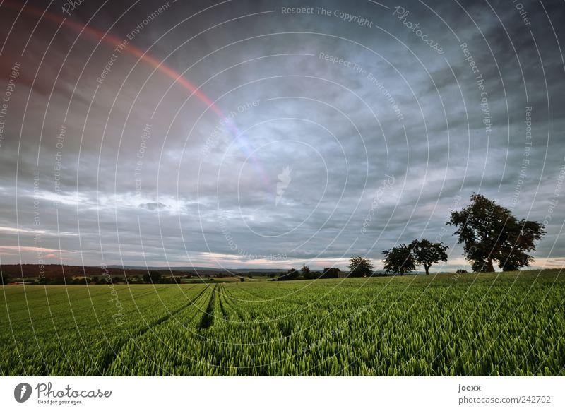 Nach der Dunkelheit Umwelt Natur Landschaft Pflanze Himmel Wolken Horizont Sommer Klima Schönes Wetter schlechtes Wetter Regen Baum Nutzpflanze Feld blau grün