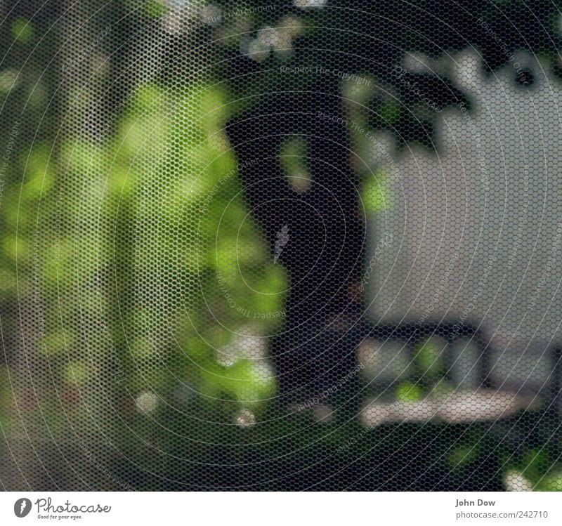 Transparenz Häusliches Leben Schönes Wetter Baum Gras Sträucher Garten Park Schutz Netzwerk netzartig Schlaufe Bildpunkt Fliege Insektenschutz Muster gewebt
