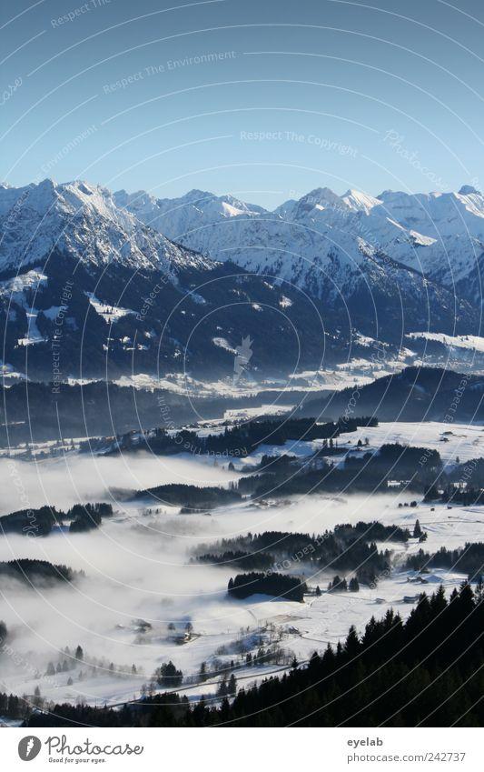 Ein Sommermärchen ? Umwelt Natur Landschaft Erde Himmel Wolkenloser Himmel Winter Klima Klimawandel Wetter Schönes Wetter Nebel Schnee Baum Wald Hügel Felsen