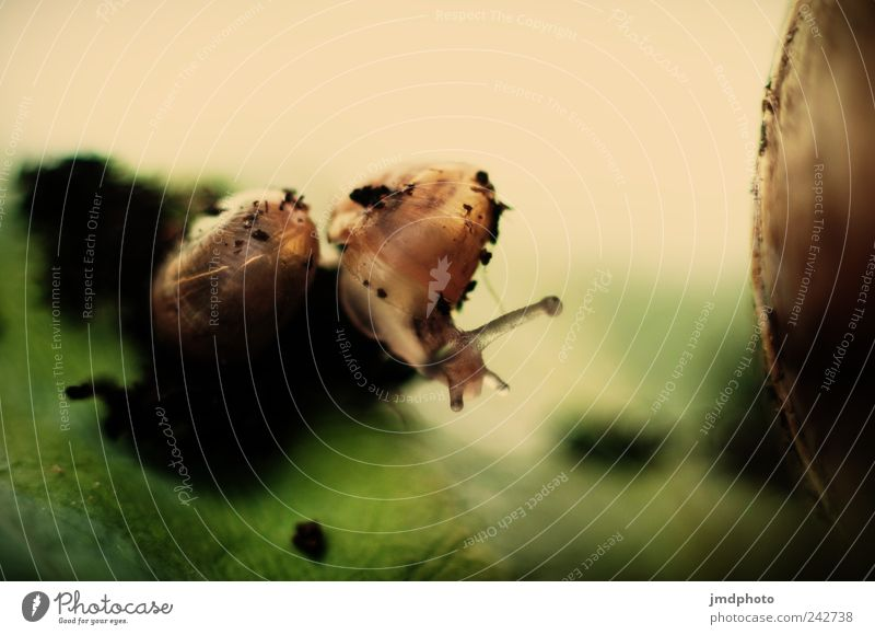 Schnecke Natur grün Pflanze Blatt ruhig Umwelt Bewegung Tierjunges Garten natürlich Tierpaar Geschwindigkeit Gelassenheit Fressen Konkurrenz