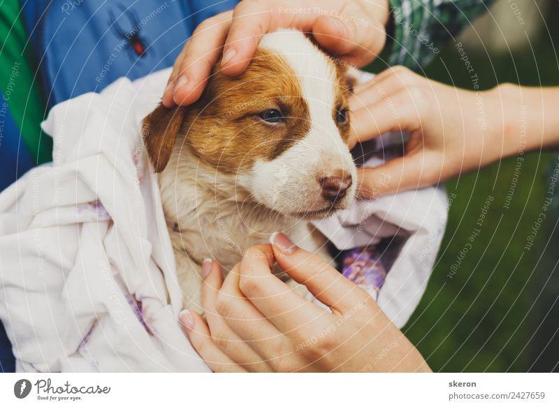 einen nassen Welpen nach einem Bad in ein Handtuch gewickelt nach Hause bringen. Freizeit & Hobby Umwelt Natur Landschaft Tier Haustier Hund 1 Tierjunges