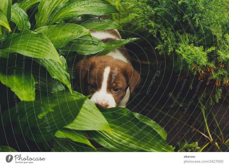 Hund grün Tier Stimmung Zufriedenheit ästhetisch Abenteuer Optimismus