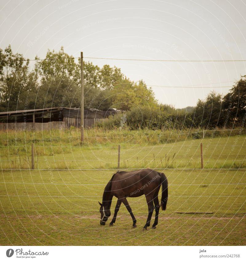 weide Natur Pflanze Himmel Baum Gras Sträucher Grünpflanze Wiese Tier Pferd 1 schön Weide Farbfoto Außenaufnahme Menschenleer Textfreiraum oben Tag Tierporträt