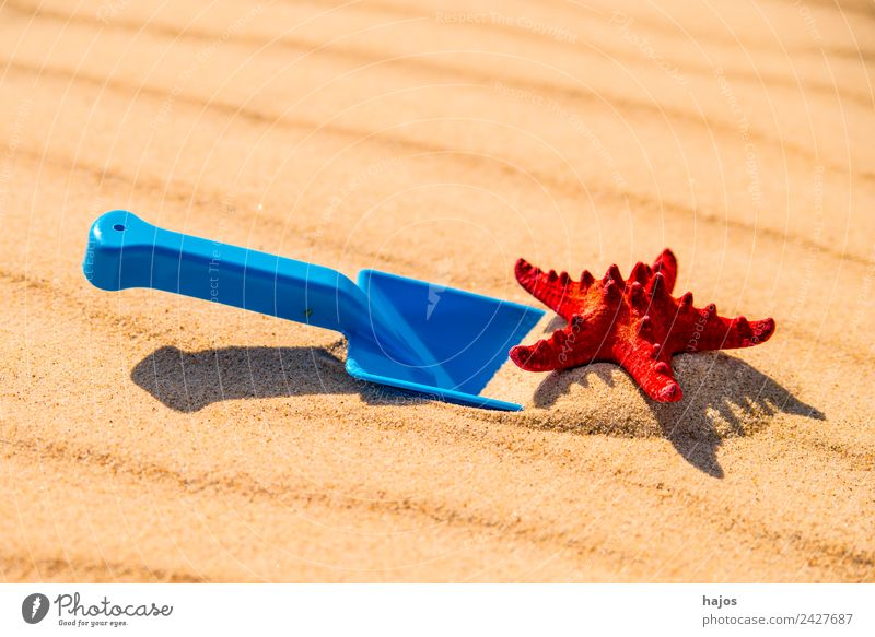 Sandstrand mit Spiezeugschaufel und Seestern Freude Erholung Spielen Ferien & Urlaub & Reisen Tourismus Ausflug Sommer Sommerurlaub Strand Kind blau gelb rot