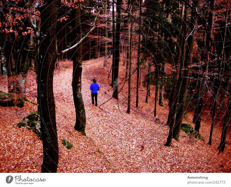 der Wanderer Mensch Mann Natur blau Baum rot Pflanze Blatt schwarz Wald Erwachsene Umwelt Landschaft Herbst Wege & Pfade Stein