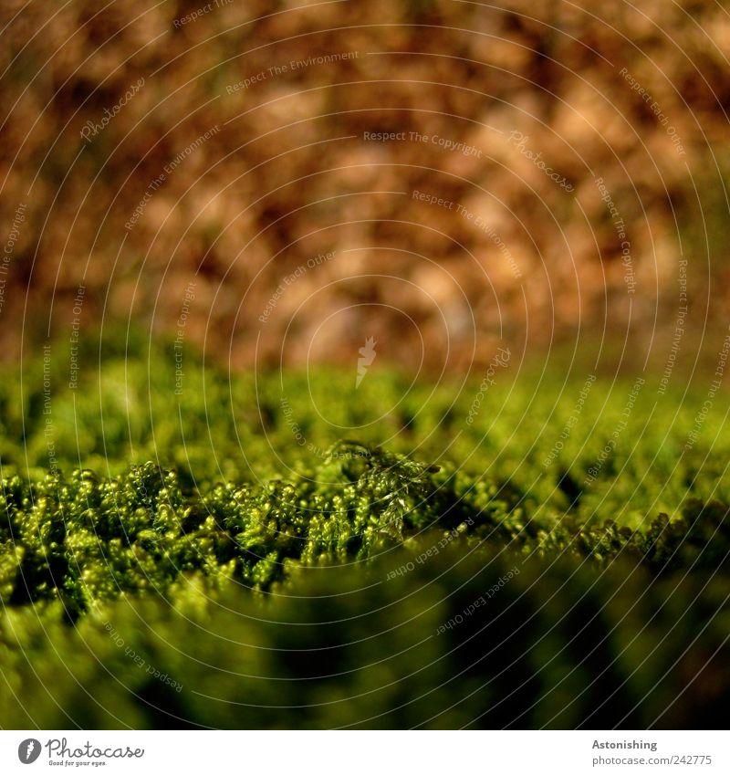 scharfes Moos grün Pflanze Sommer Blatt Umwelt Landschaft Herbst Gras braun orange Erde Schönes Wetter weich Waldboden