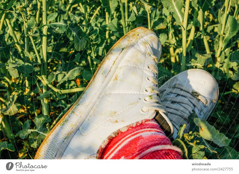 Übereinandergeschlagene Füße mit dreckigen Sportschuhen im Grünen Beine Fuß 1 Mensch Umwelt Natur Sommer Pflanze Grünpflanze Nutzpflanze Feld Strümpfe Schuhe