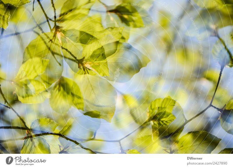 Wald im Frühling Umwelt Natur Pflanze Himmel Schönes Wetter Baum Sträucher Blatt Grünpflanze Wachstum blau grün durchsichtig Farbfoto Gedeckte Farben