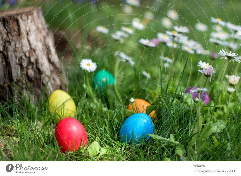 Osterjagd Freude Glück Spielen Jagd Garten Dekoration & Verzierung Feste & Feiern Ostern Hand Natur Baum Blume Gras Park Wiese frisch blau grün weiß