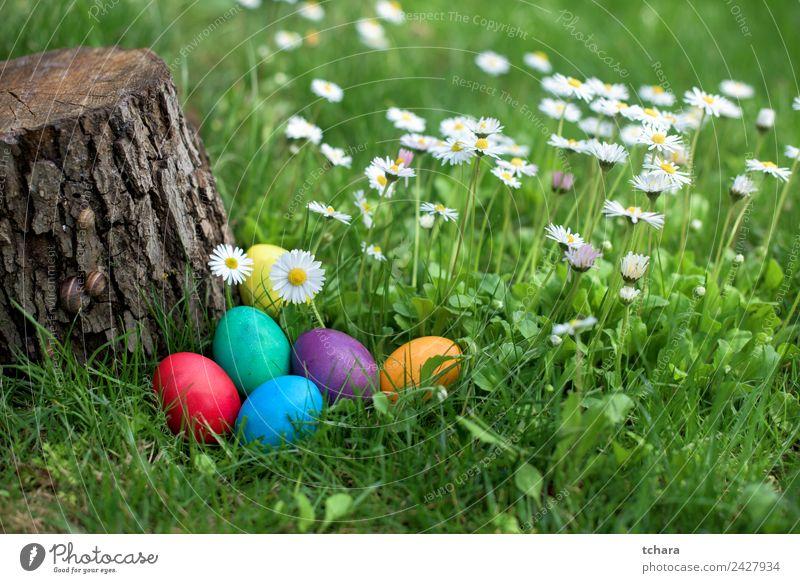 Ostereier im Garten Freude Glück Spielen Jagd Dekoration & Verzierung Feste & Feiern Ostern Hand Natur Baum Blume Gras Park Wiese frisch blau grün weiß
