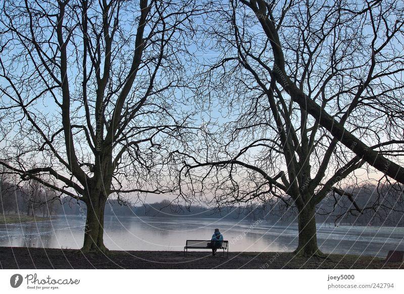 Stille Mensch blau Baum Einsamkeit ruhig Erwachsene kalt Gefühle See Park Kraft warten sitzen natürlich hoch groß