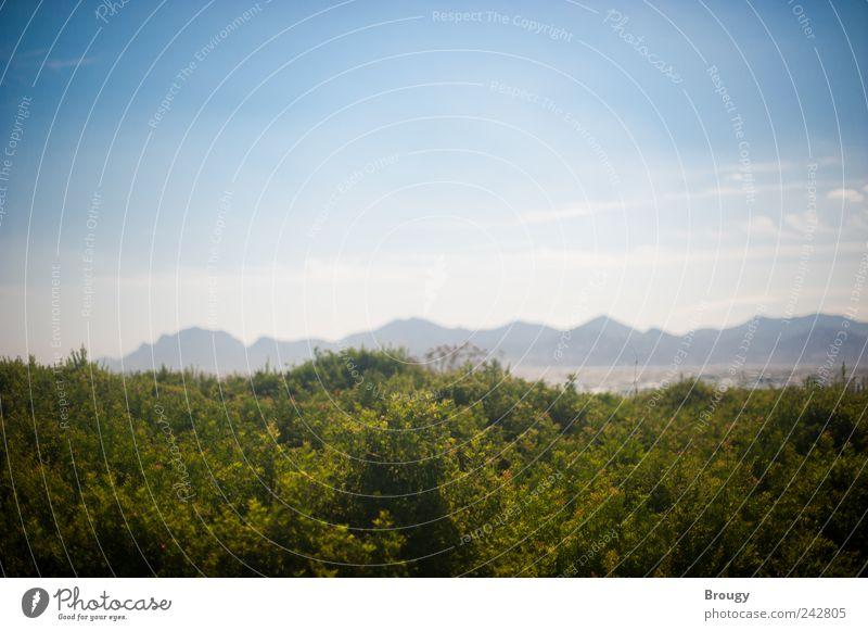 Landschaft mit Sträuchern vor Meerpanorama mit Bergen blau grün schön Sommer Ferien & Urlaub & Reisen Strand Wolken Ferne Freiheit Berge u. Gebirge Glück Küste